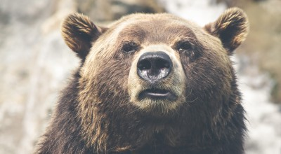 Is the bear making its move? What should investors do?